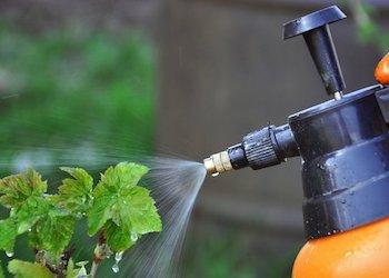 Чем обработать кусты в саду от вредителей?