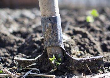 Нужно ли перекапывать огород осенью: плюсы и минусы