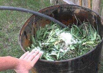 Зеленое удобрение: как приготовить и для чего использовать?