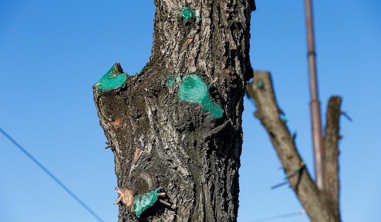 Зеленка для обработки деревьев