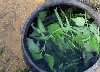 Как приготовить зеленое удобрение из сорняков и крапивы?