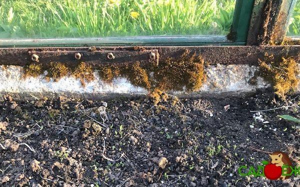 Почему в теплице из поликарбоната растет зеленый мох. Что делать и как избавиться от мха?