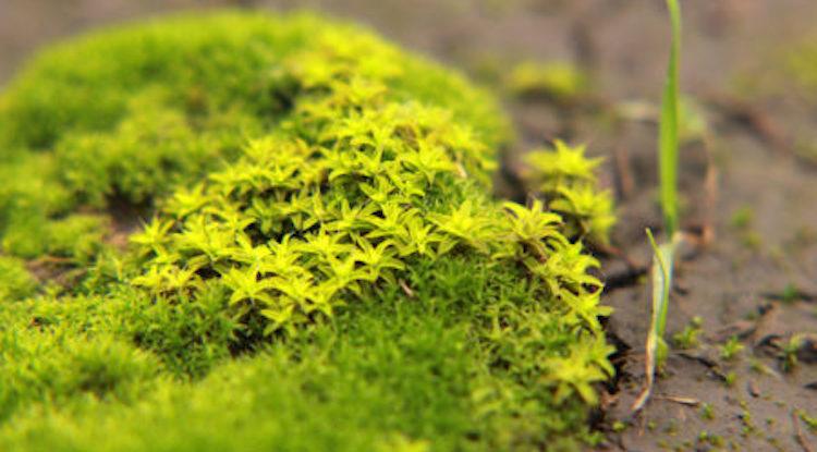 почему на огороде растет мох