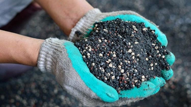 Чем подкормить пионы для цветения?