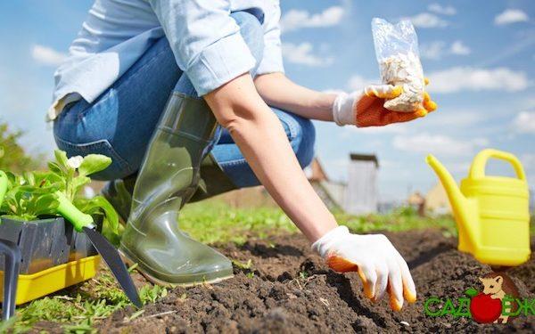 Что можно посадить в июле в огороде: овощи, зелень, цветы