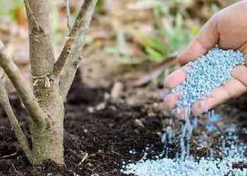 Фосфорное минеральное удобрение для растений в огороде