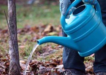 Обязательный полив плодовых деревьев осенью