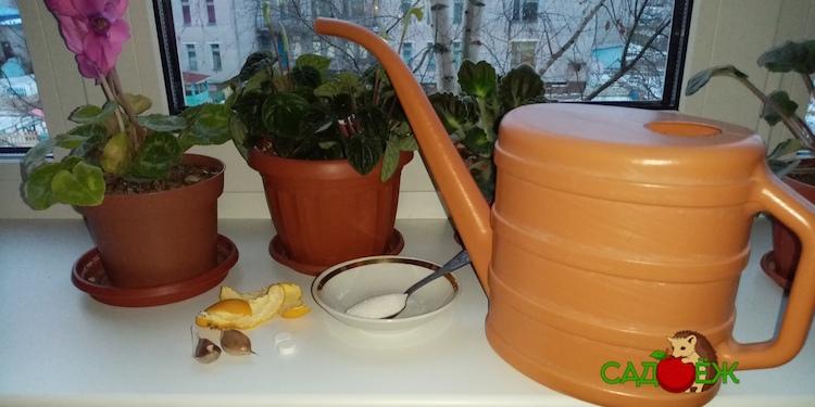 Чем подкормить комнатные цветы осенью и зимой в домашних условиях?