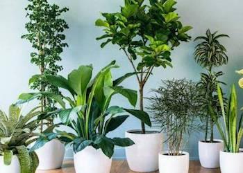 Какие растения лучше всего очищают воздух?