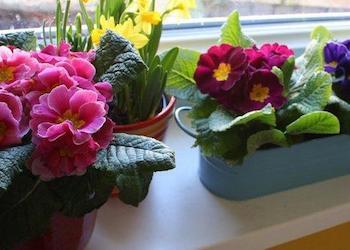Как лучше расставить комнатные растения на подоконнике?