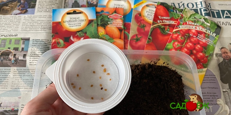 Когда можно сажать помидоры на рассаду в марте 2021 года?