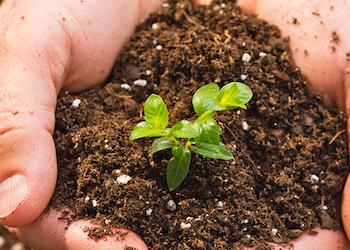 Как определить кислотность почвы самостоятельно в домашних условиях?