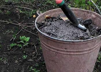 Какие растения в огороде нельзя удобрять золой?