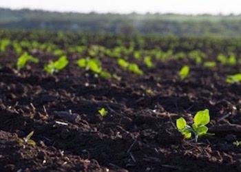 Какие растения раскисляют почву в огороде