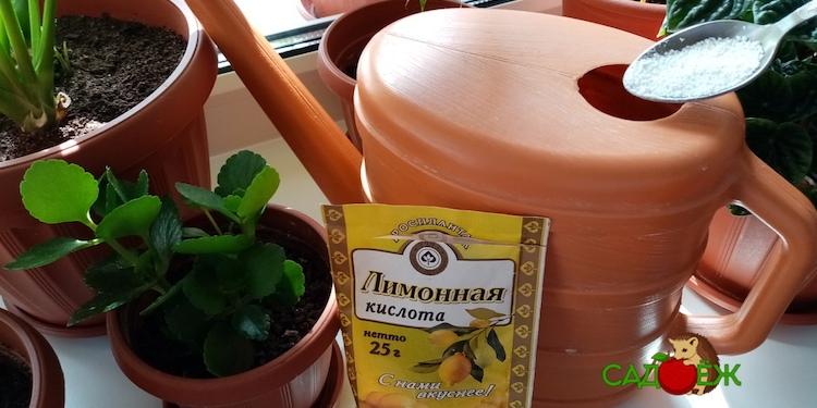 Какие растения нужно поливать подкисленной водой и как часто?