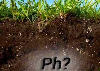 Причины закисления почвы в огороде