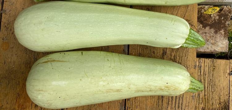 Период плодоношения кабачков