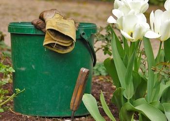 5 ошибок при посадке тюльпанов осенью в открытый грунт